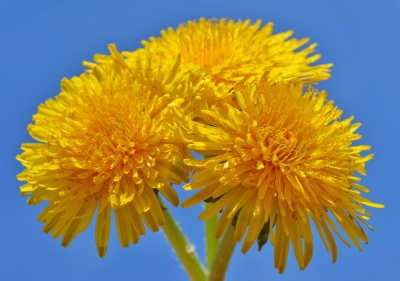 Picture by  sattva coutesty FreeDigitalPhotos.net